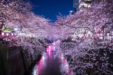Kachidoki Bridge|Rainbow Bridge|Cherry Blossoms along Meguro River|Japanese Magnificent Scenery Tokyo【No 6】